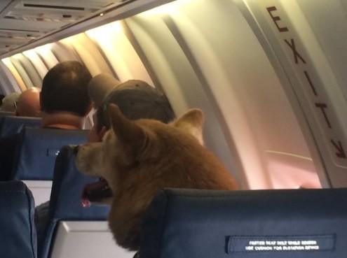 Animal se comportou durante o voo (Crédito: Reprodução)