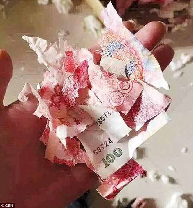 Filhote mastiga dinheiro (Crédito: Reprodução)