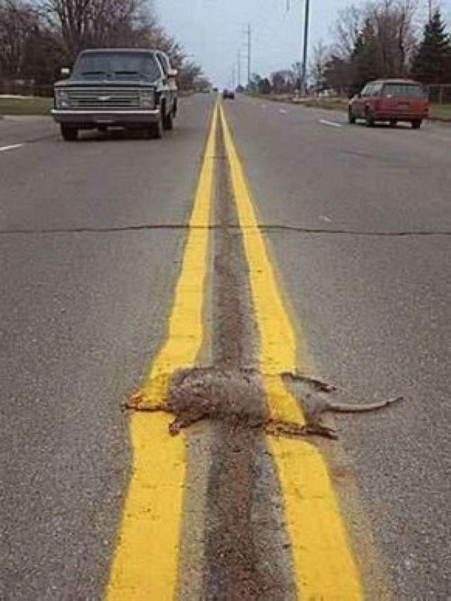 Animais em decomposição nas estradas (Crédito: Reprodução)