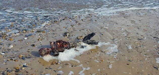 Suposto corpo de sereia é encontrado em praia