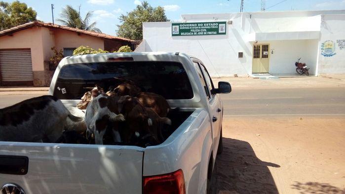 Animais apreendidos (Crédito: Divulgação/ Polícia Civil)