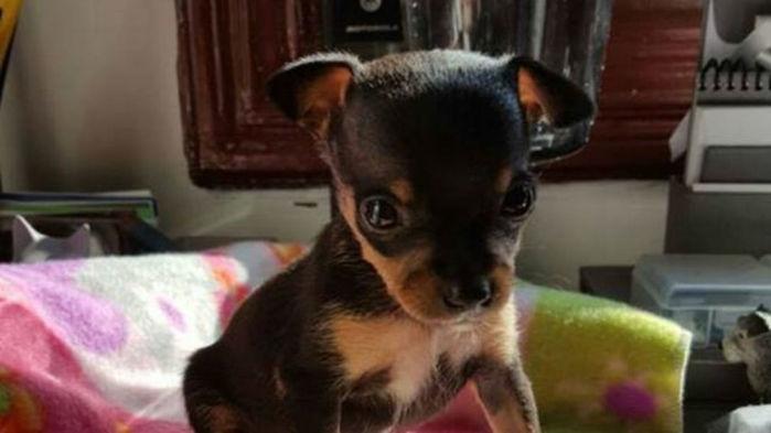 Cãozinho Tião