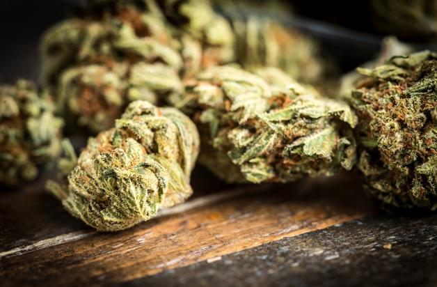Vinho feito à base de cannabis