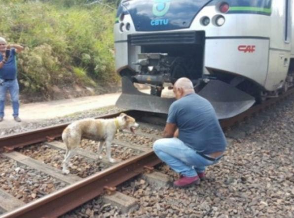 Cadela foi libertada por seguranças do metrô (Crédito: Reprodução)