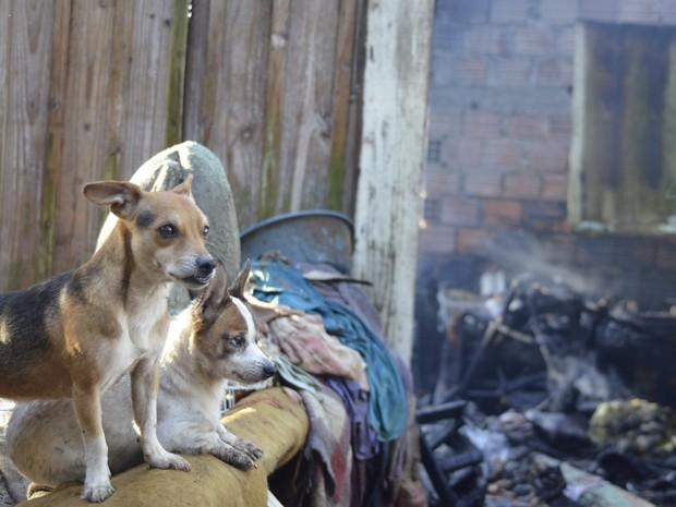 Animais foram levado para o Centro de Controle de Zoonoses (Crédito: Fom Conradi/Agência )