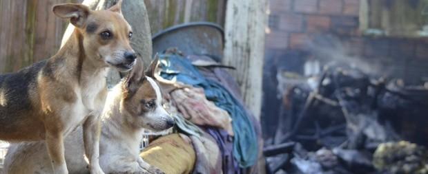 Idosa fica em estado grave e 9 cães morrem após incêndio em casa