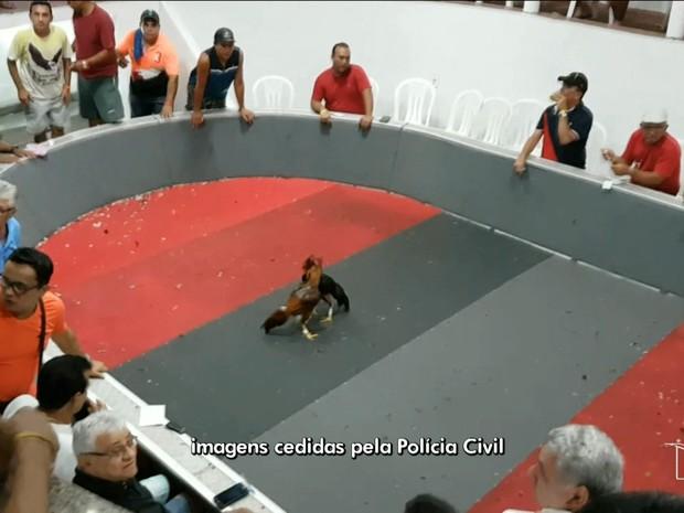 Campeonato de Briga de Galos (Crédito: Polícia Civil)