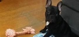 Bandido armado rouba cachorro de morador da Ilha do Governador
