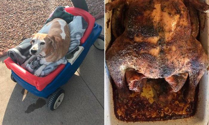 Cadela com doença terminal é presenteada com suas comidas favoritas