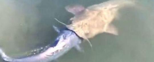 Pescador flagra peixe tentando devorar outro em lago nos EUA