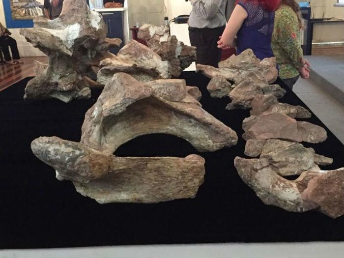 Descoberta do fóssil foi anunciada no Museu de Ciências da Terra