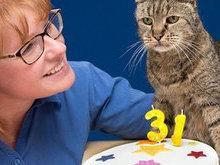 Gato de 31 anos pode ser o mais velho do mundo