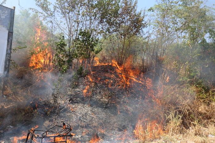 Incêndio às margens da Avenida dos Ipês  (Crédito: Efrém Ribeiro)