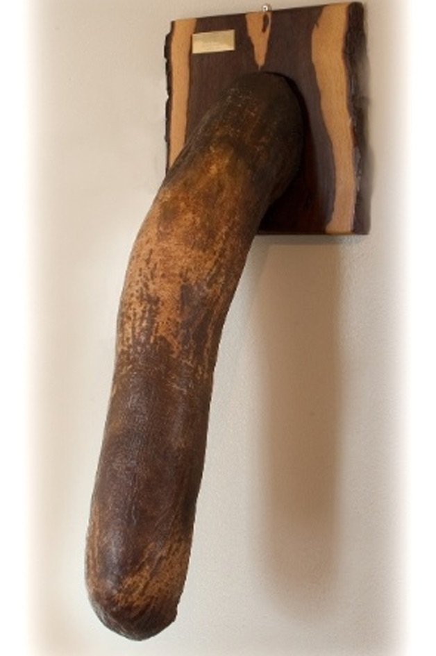 Réplica de um pênis de elefante (Crédito: Reprodução)