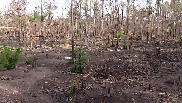 Comunidade Borborema, na zona rural de Teresina, destruída pelo fogo (Crédito: Rede Meio Norte)