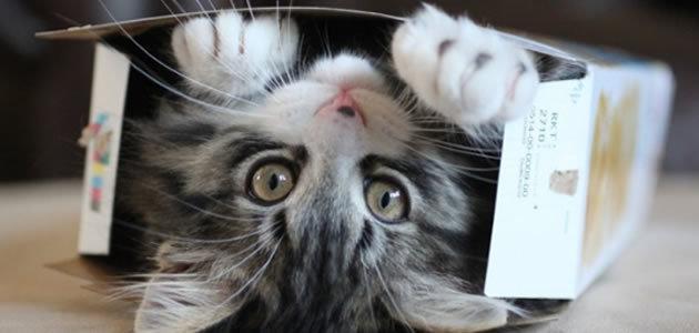 Por que os gatos se escondem em caixas?