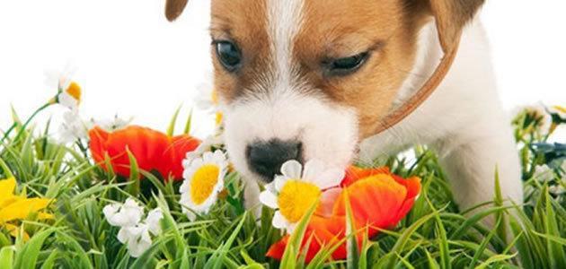 8 plantas que fazem mal ao seu animal de estimação