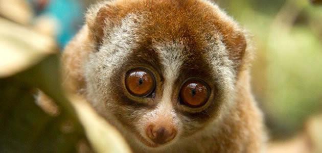 7 animais que podem desaparecer até o final do século