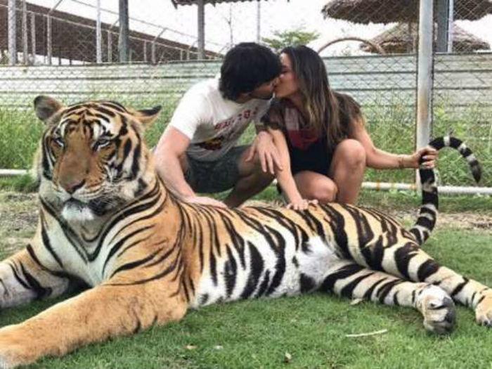 Patricia Abravanel posta foto com tigre e causa polêmica nas redes sociais