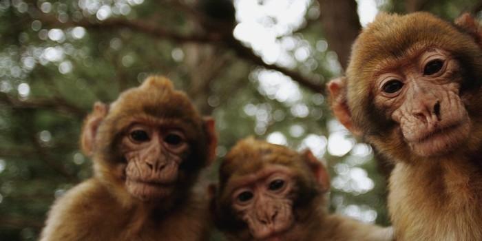 Incidente com macaco causou confronto com 16 mortos na Líbia