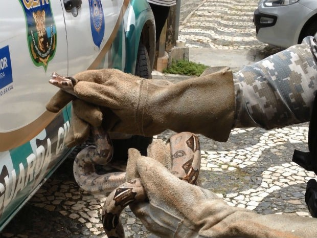 Cobra foi resgatada dentro de uma casa (Crédito: Reprodução / TV Bahia)