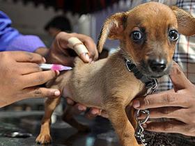 Oeiras realiza campanha de vacinação contra a raiva