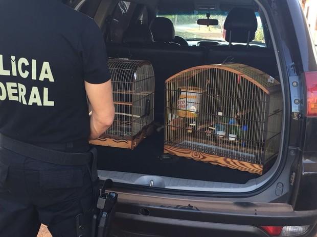Polícia Federal combate à caça de animais silvestres no Maranhão (Crédito: Divulgação)