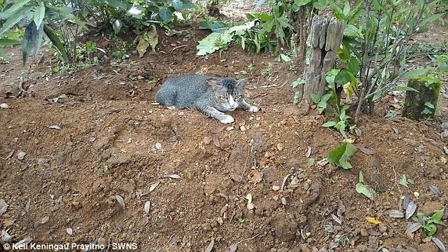 Gata vai diariamente visitar o túmulo de sua antiga dona (Crédito: Reprodução)