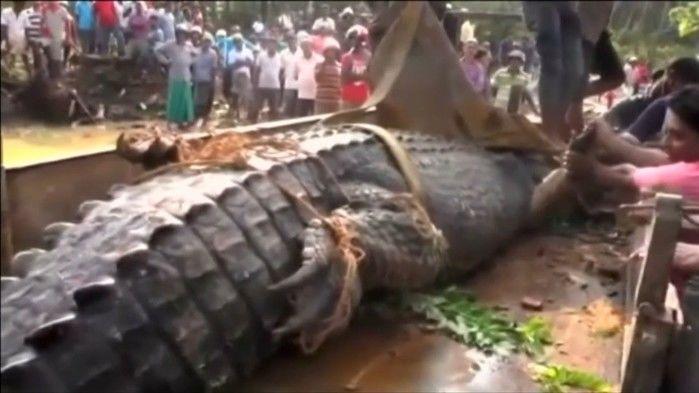 Crocodilo gigante foi devolvido a rio  (Crédito: Reprodução/ Reuters)