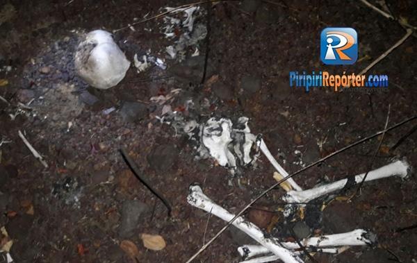 Ossada humana é encontrada por crianças em Piripiri