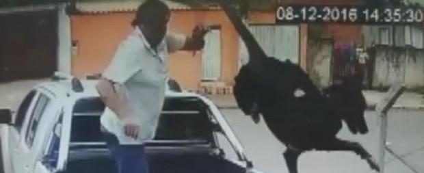 Cão jogado por cima de portão de ONG está com a pata ferida
