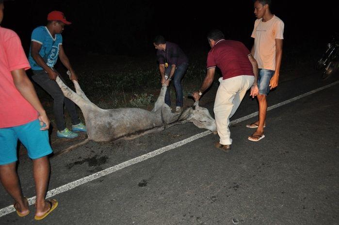 Animal morreu após o acidente