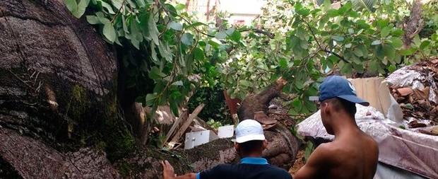 Árvore de terreiro de candomblé cai, atinge casas e mata idosa