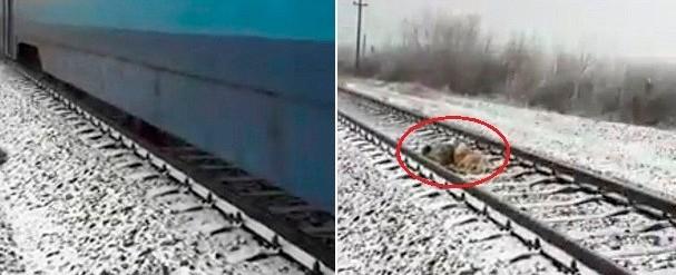 """Cão protege a """"namorada"""" ferida em linha férrea por 2 dias; vídeo"""