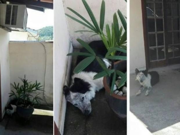 Cachorro foi encontrado em uma poça (Crédito: Reprodução)