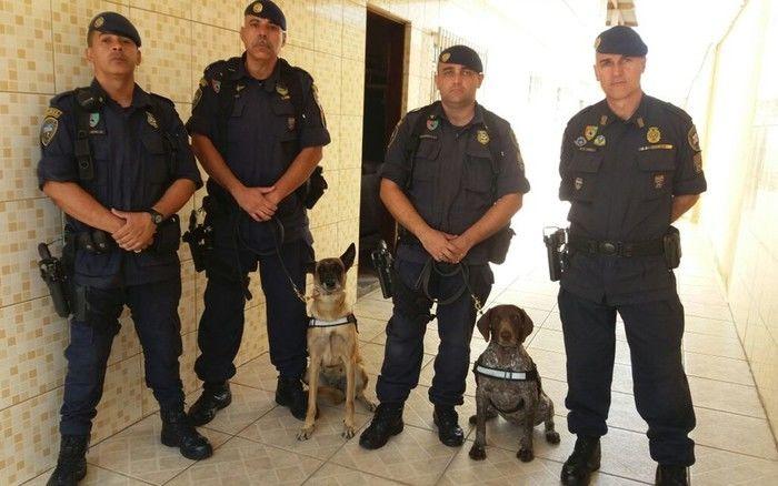 GCMs e cadelas que atuaram em busca por mulher cimentada na Zona Leste (Crédito: Reprodução)