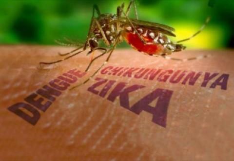 Novo teste irá detectar zika vírus  em apenas cinco horas