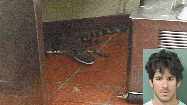 Jovem joga jacaré vivo dentro de restaurante (Crédito: Reprodução)
