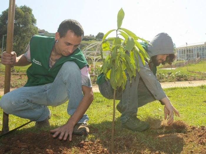 Jovens plantam árvore (Crédito: Divulgação)