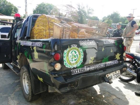 Animais apreendios pela Polícia Ambiental