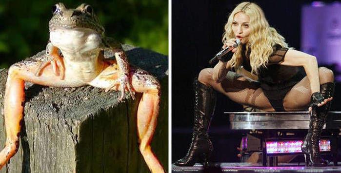 Fotos de famosos iguaizinhos a animais (Crédito: Reprodução)