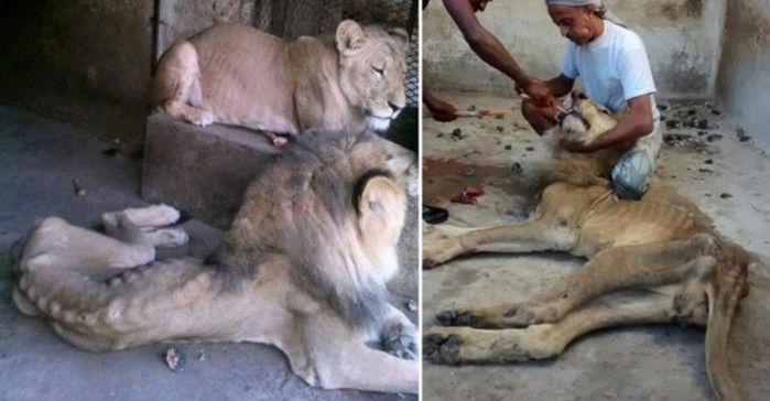 Até agora foram contabilizados 281 animais ameaçados (Crédito: Reprodução)