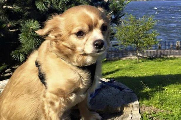 Cachorro foi vítima de ataque de ciúmes (Crédito: Reprodução)