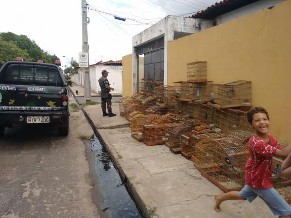 Aves apreendidas pela Polícia Ambiental