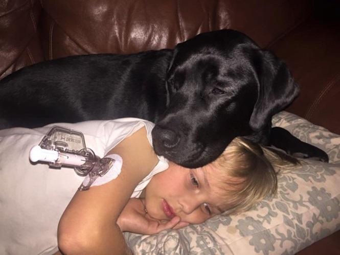 Cão salva a vida de menino diabético durante a noite e vira héroi (Crédito: Reprodução)