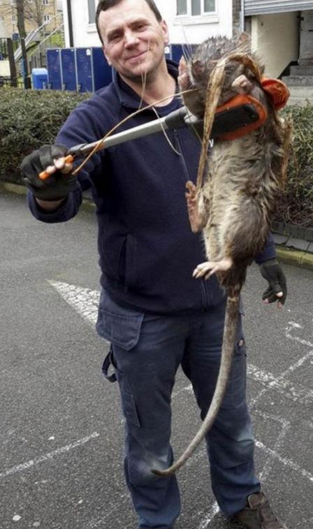 Rato do tamanho de uma criança é encontrado em Londres (Crédito: Reprodução)