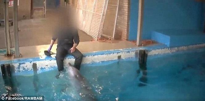 Homem flagrado em ato íntimo com golfinho (Crédito: Divulgação)
