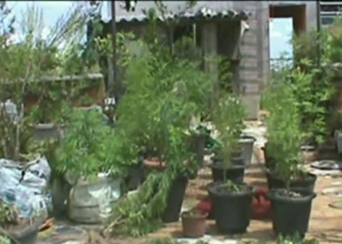 Plantação na casa da vovó