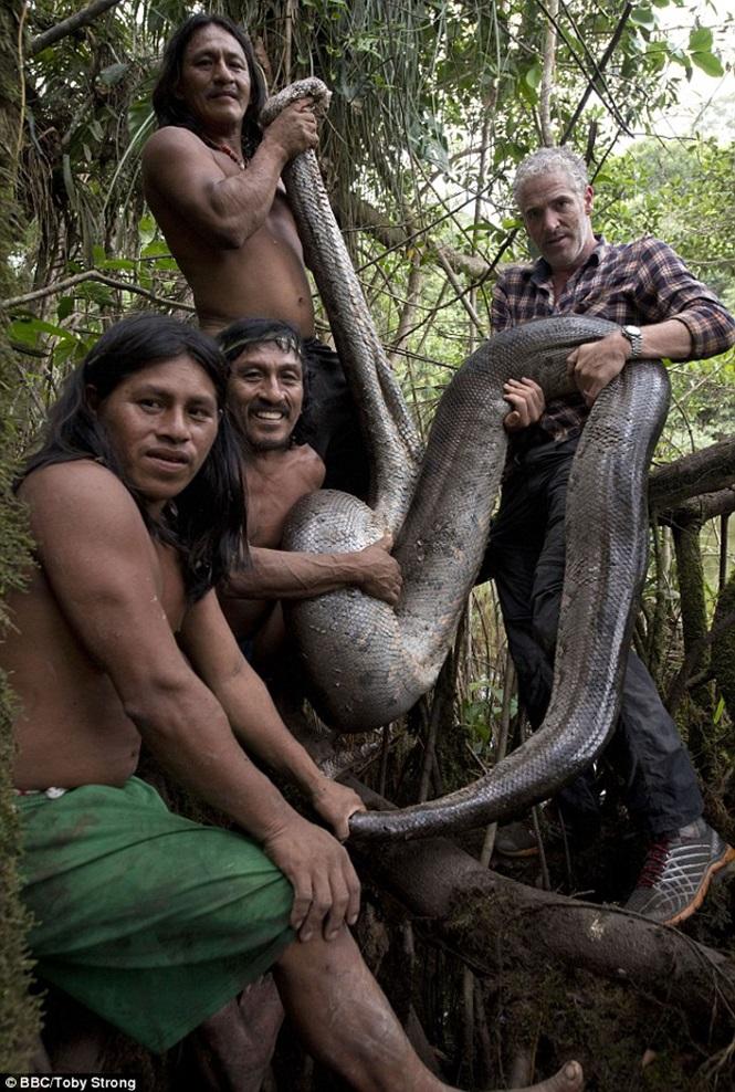 Sucuri de 5,18 metros foi encontrada por alguns Waoranis (Crédito: Divulgação)