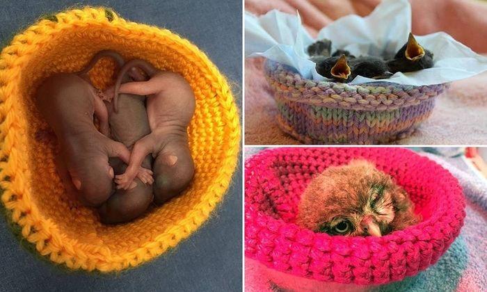 Ninhos ajudam animais em reabilitação
